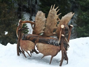 Moose Antler Light Fixtures